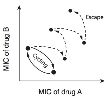Dynexan mundgel beipackzettel ciprofloxacin